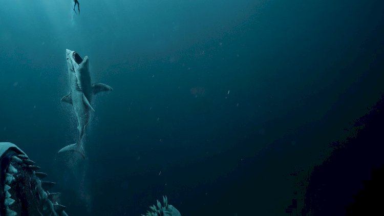 The Real size of Megalodon revealed